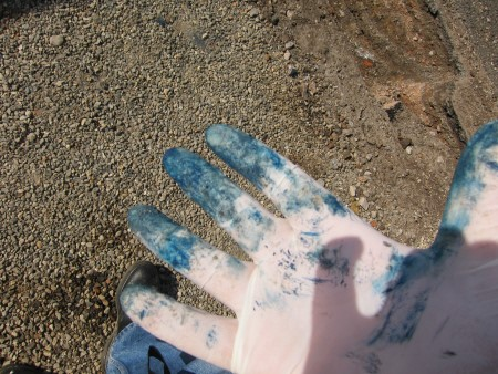 Blue Billy staining a person's hand. Picture from gardenbeet.com